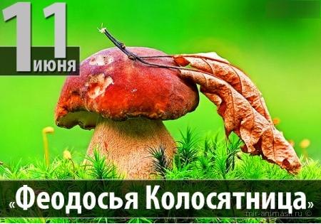 Феодосья Колосятница - 11 июня