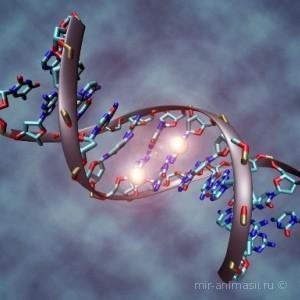 День ДНК 2020 - 25 2020 апреля
