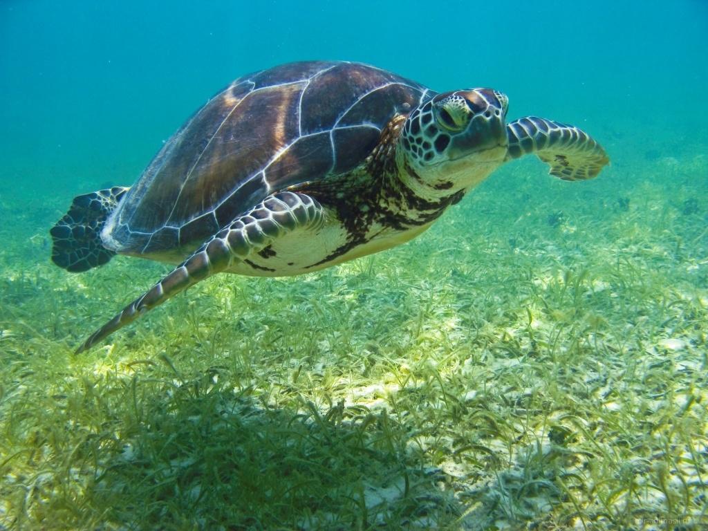 Всемирный день черепахи - 23 мая