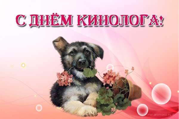 Поздравление с днём рождения от собаковода
