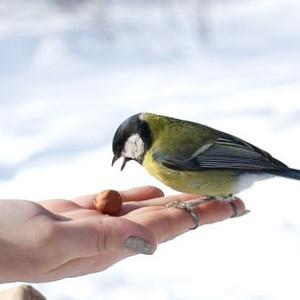 Международный день птиц 2018 - 1 апреля