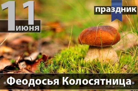 Феодосья Колосятница 2016 - 11 июня