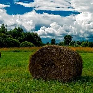 Кузьма и Демьян, летние Кузьминки 2017 - 14 июля