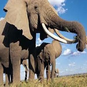 Слоноуин - Всемирный день слонов 2017 - 30 ноября