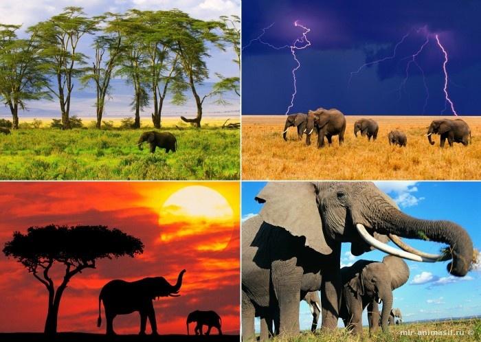 Слоноуин - Всемирный день слонов - 30 ноября