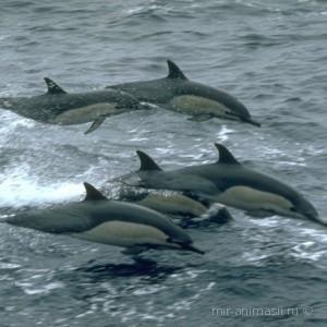Всемирный День защиты морских млекопитающих 2018 - 19 февраля