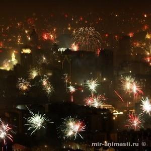 Китайский Новый год 2017 - 28 января
