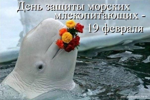 Всемирный День защиты морских млекопитающих - 19 февраля