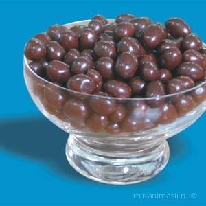 День арахиса в шоколаде - 25 февраля