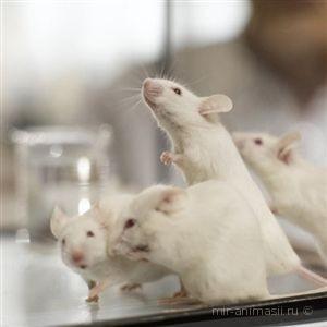 Всемирный день защиты лабораторных животных 2017 - 24 апреля
