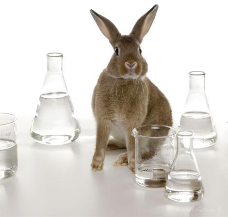 Всемирный день защиты лабораторных животных - 24 апреля