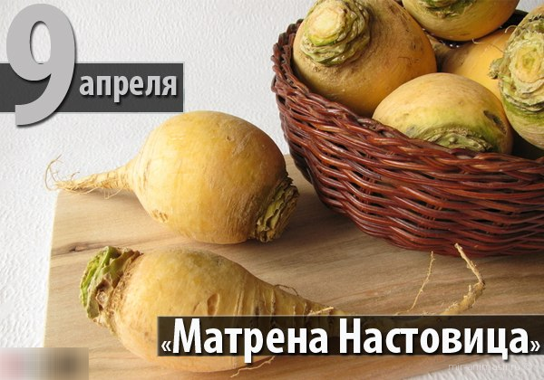Матрена Настовица, Полурепница - 9 апреля