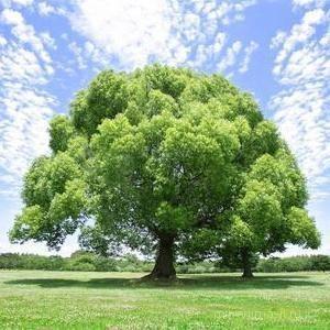 День экологических знаний 2017 - 15 апреля