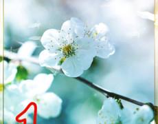 С праздником Весны 1 мая